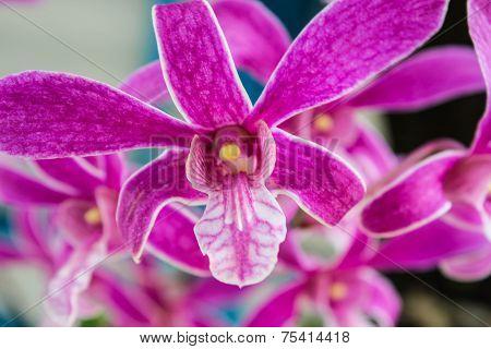 Beautiful purple orchid flowers