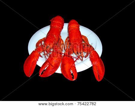 Lobsters on the plate isolated