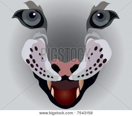 Lady Katze mit Hund Zähne