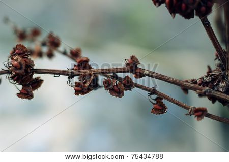 seeds on withered branch
