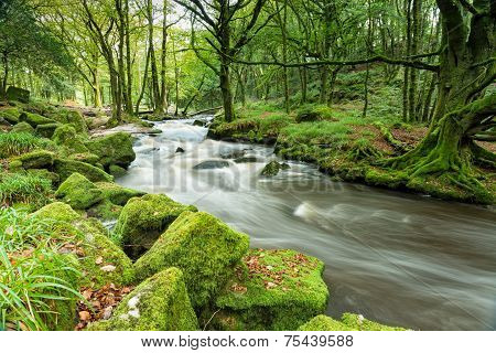 Magical Forest River