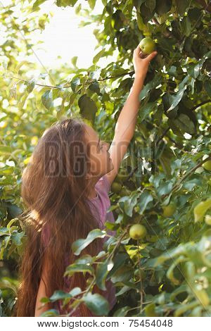 Brunette Girl Reaches Green Apple On Tree At Sunny Day