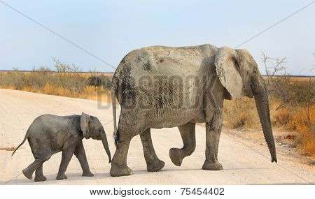 Elephant Mum & Calf in Etosha