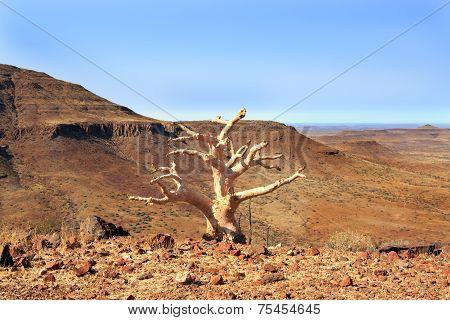 Isolated tree in Damaraland