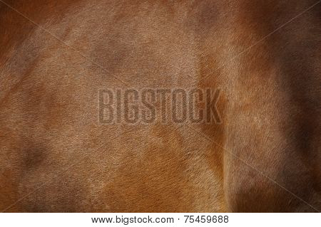 Brown horse pelt texture - skin and fur background
