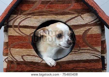 Image of puppy in the kennel