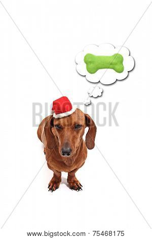 A dog thinking about its christmas gift.