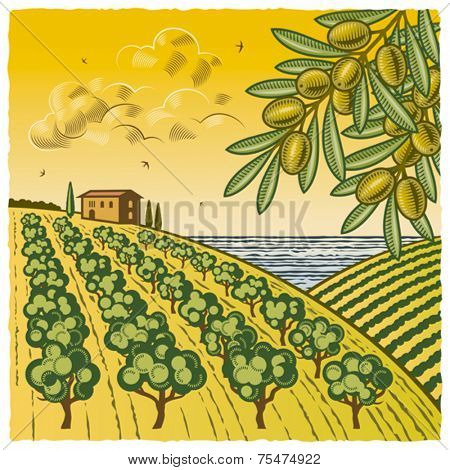 Olive Grove. Vector