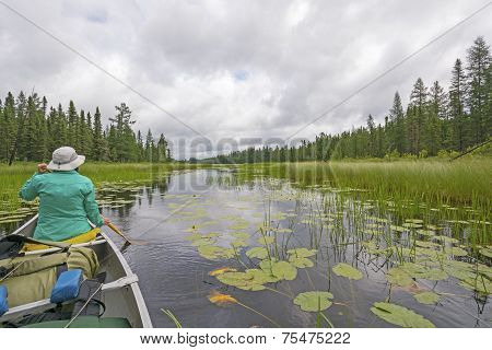 Canoeing Through Lily Pads On A Cloudy Day On A Quiet North Woods Lake