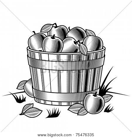 Retro bushel of apples black and white