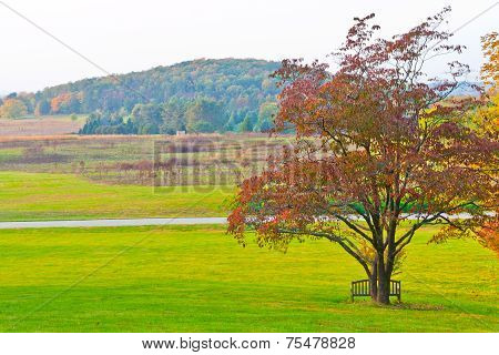 Big Branchy Autumn Tree  And Green Grass On A Meadow Around.