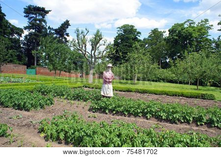 scarecrow in vegetable garden