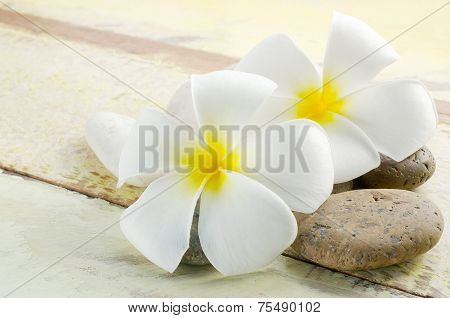 White And Yellow Frangipani Flower