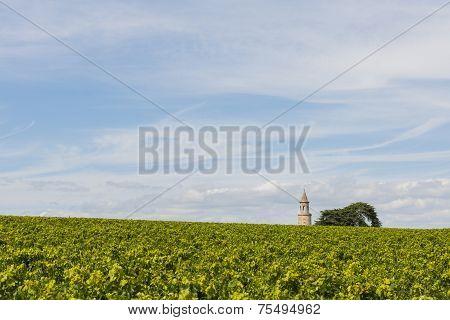 Vinyard With Tower  Roque