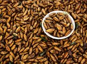 stock photo of worm  - Fried Insects - JPG
