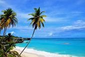 pic of caribbean  - Topical Palms at Bottom Bay , Barbados, Caribbean