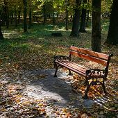 pic of banquette  - wooden bench in the park in the sunlight - JPG