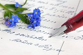 stock photo of forget me not  - Forget - JPG