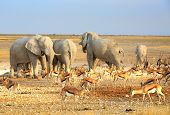 picture of veld  - Herd of elephants around a waterhole in Etosha - JPG