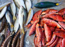 pic of fresh water fish  - Fresh seafood show at Vietnam open air market fish is nutrition food rich omega 3 healthy eating commonly at coastal Asian raw for many dish - JPG