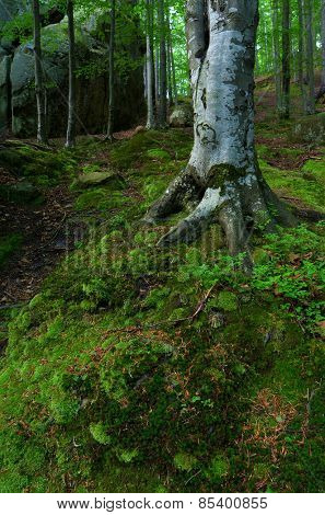 Spring landscape in the forest. Beautiful moss