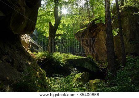 Sunny day. Beautiful fairy forest. Springtime