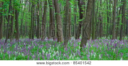 Spring panorama. Flowers in the forest. Beauty in nature