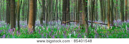 Spring forest. Landscape panorama. The first flowers