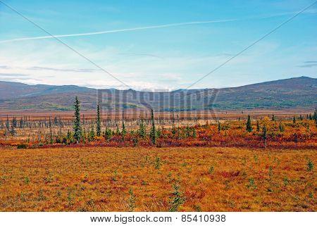 Permafrost in Alaska in Fall