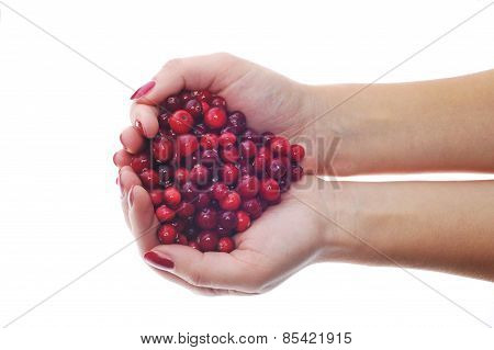 Woman Hands Holding Cranberries