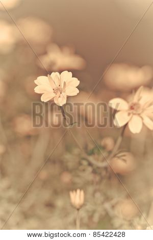 Flowers Blossoming In Spring Time, Vintage Style