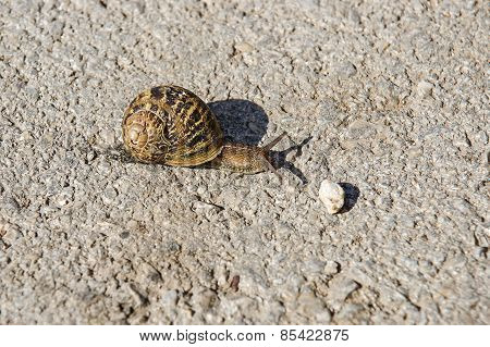 Snail With Cracked Shell