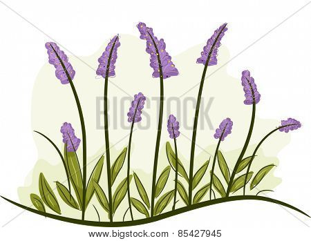 Illustration of a Bunch of Lavender Flowers in Full Bloom
