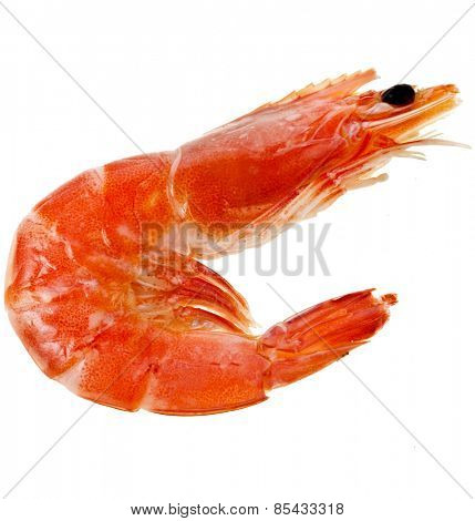 Prawn Shrimp  isolated on a white