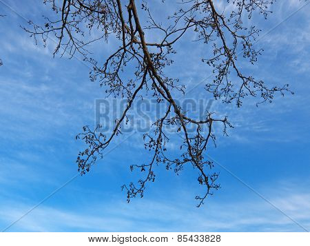 branches on the clouds sky