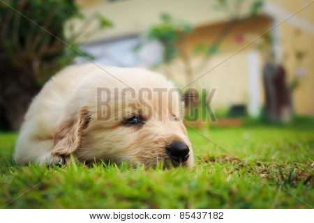Puppy sleep on the grass with copy-space on the right.
