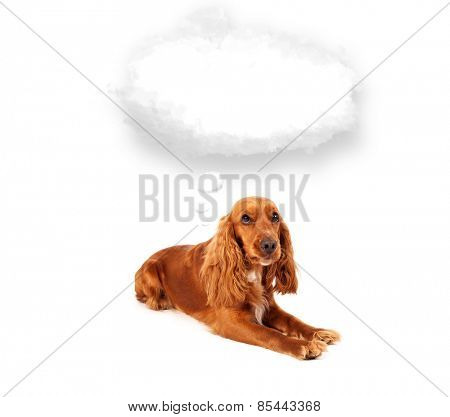 Cute brown cocker spaniel with empty cloud bubble above her head