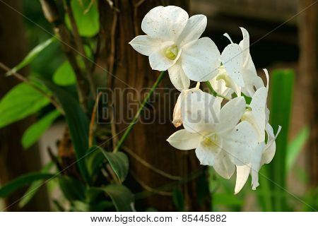White Flower In Nature At The Garden