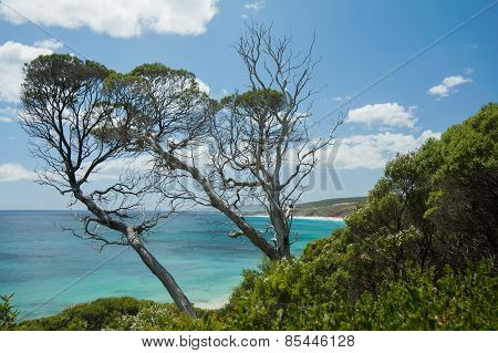 Ti-trees Over The Ocean