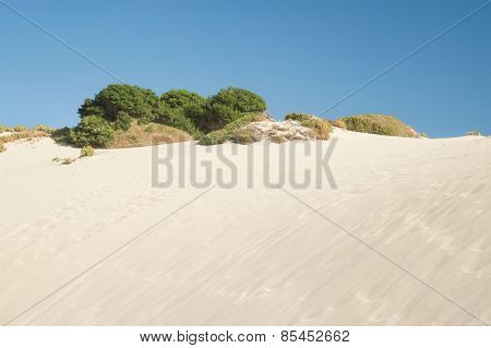 Atop The Dune
