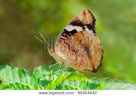 A colorful butterfly sitting on green leaves in a garden