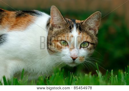 Portrait of an adorable cat in garden on grass