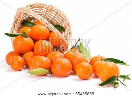 Wicker Basket Full Clementines