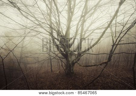 Tree in scary mysterious forest with fog