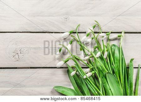 Snowdrop Flowers On Wooden Background