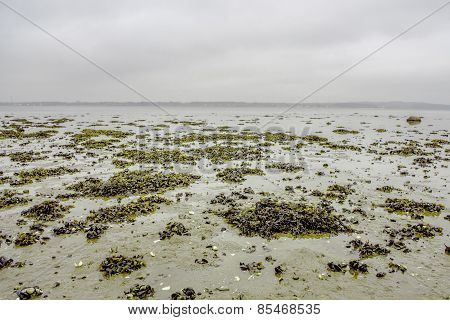 Seaweed On A Shore