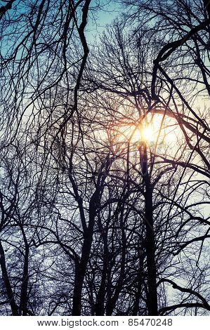 Sun With Lens Flare In Bare Trees Silhouettes Over Blue Sky