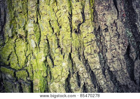 Closeup Texture Of Old Green Tree Bark, Detailed Photo