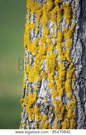 Yellow Moss On Tree