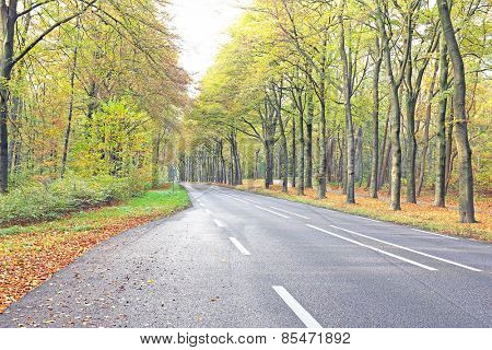 Country road in fall in the Netherlands